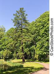 green landscape in spring