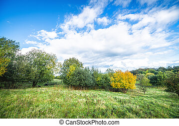 Green landscape with a yellow tree