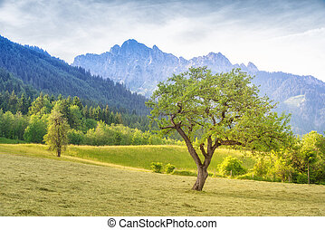 green landscape with single tree at mowed meadow at fall