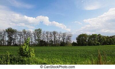 Green landscape,time lapse