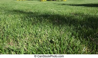 Green lawn for background. Dolly shot. Close up.