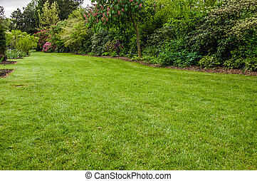 Green lawn in a garden