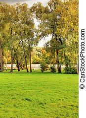 Green lawn in autumn