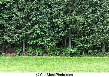 green lawn in front of forest