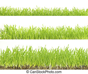 lawn isolated on white - Green lawn isolated on white ...