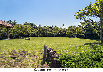 green lawn surrounded by trees on sunny day