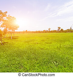 Green lawn with sunlight