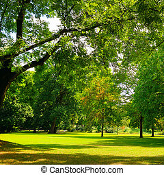 Green lawn with trees and clear bright sky.
