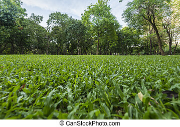 Green lawn with trees in park