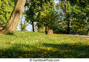 Green lawn with trees in the park on a sunny day