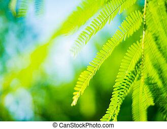 Green leaf abstrack background
