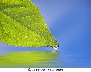 green leaf against blue background