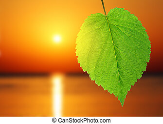 green leaf and sunrise over sea