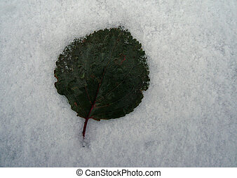 Green leaf at the first snow