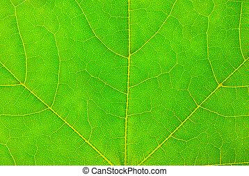 studio shot of green leaf texture