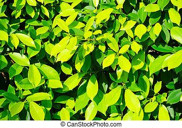 Green Leaf Background Texture