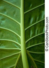 Green leaf background texture.