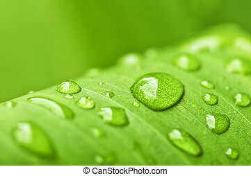 Natural background of green plant leaf with raindrops