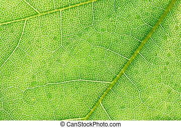 green leaf beautiful nature background