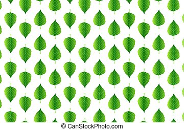 Green leaf birch on white background - vector pattern,...