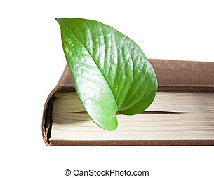green leaf bookmark in a book isolated on white background