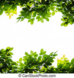 Green leaf border isolated on a white background