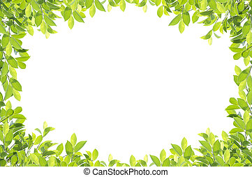 Green leaf border isolated on white background. Clipping paths included.
