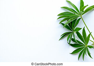 green leaf branches on white background. flat lay, top view.