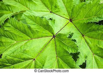 Green leaf. Close up.