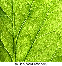 green leaf close up nature background