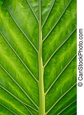 Green leaf - Close up of a green exotic leaf
