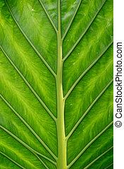 Green leaf - Close up of a green exotic leaf