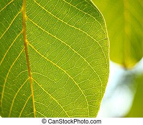 Green leaf - Close up of a green leaf, macro