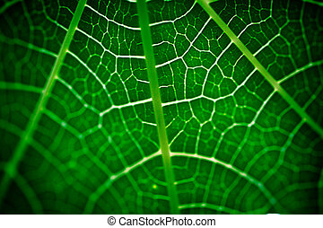 Green Leaf Close Up texture