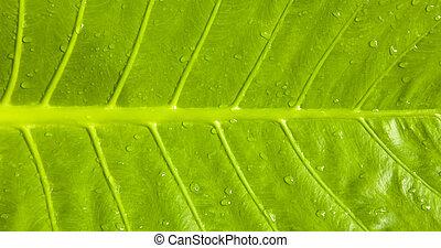 Green leaf closeup macro photo - Green leaf texture closeup ...