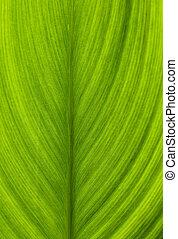 Green leaf closeup macro shot