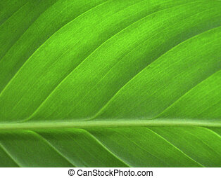 Green leaf closeup as a background image