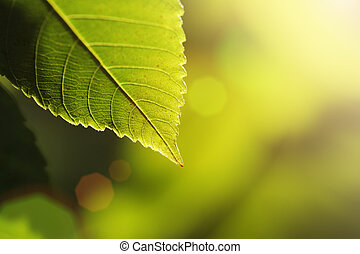 Green leaf detail over sunny blur background. Shallow DOF.