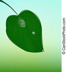 Green leaf. Ecology concept