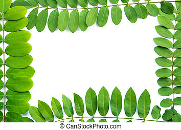 Green  leaf  frame with  copy space