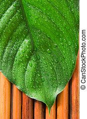 Green leaf - Fresh green leaf on a bamboo background