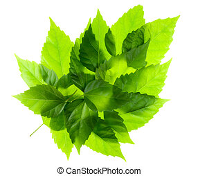 Green leaf from leaves - Big green leaf is made from many...