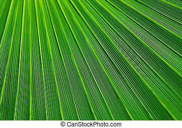 Green Leaf - Green lines Leaf