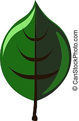 Green leaf, illustration, vector on white background.
