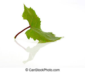Green leaf in a white background with reflection