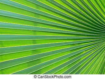 Green leaf in back light