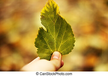 Green leaf in hand close up