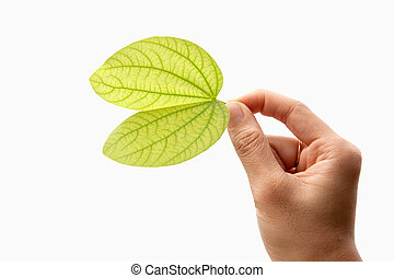 Green leaf in hand. Isolated on white