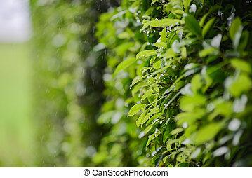 Green leaf in rain