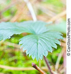 green leaf in the forest